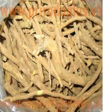 Čaj Šišiak bajkalský - koreň 50 g