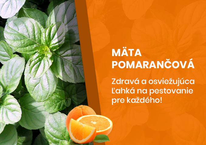 Mäta pomarančová