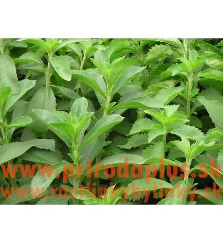 Stévia sladká-(Stevia rebaudiana Bertoni L.)